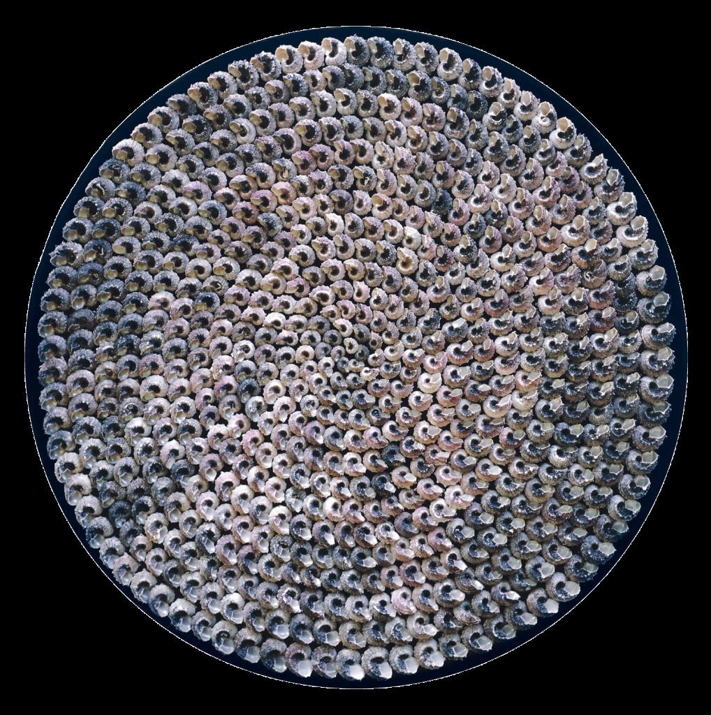 Uit de serie Reflectie: wandobject met honderden Angaria slakkenhuizen op zijden fluweel. Ø 97cm. Het parelmoer reflecteert het opvallende licht.