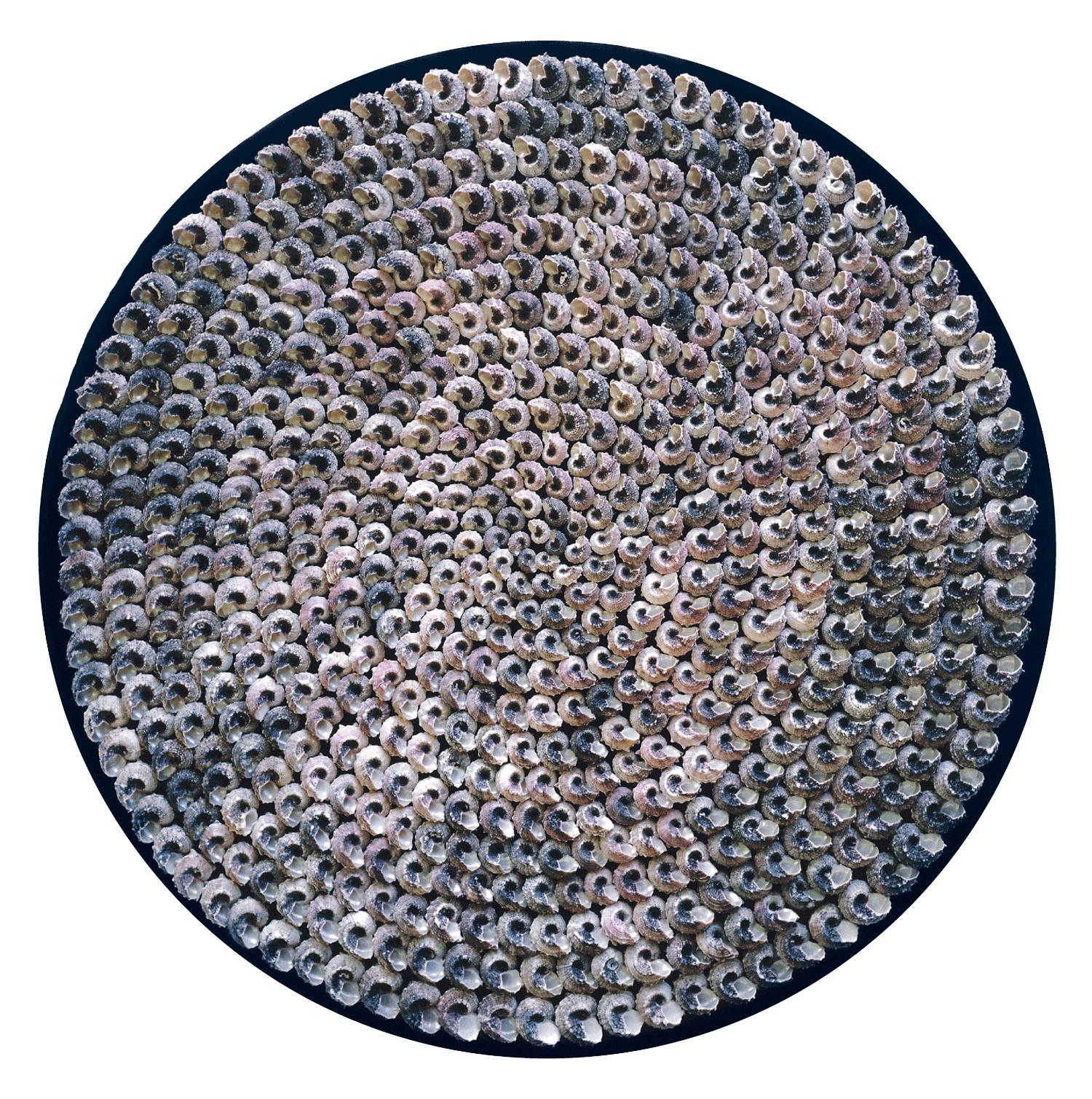 Uit de serie Reflectie: wandobject met honderden Angaria slakkenhuizen op zijden fluweel. Ø 97cm. Het parelmoer reflecteert het erop vallende licht.