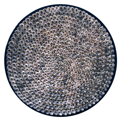 Wall object with Angaria snail shells on a silk velvet base. Ø 97cm. The mother-of-pearl catches the striking light. Reflection